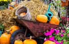 Answer HAY, WATERING CAN, PUMPKIN, BUTTERFLY, TIRE, WHEELBARROW, PETUNIA, RUST