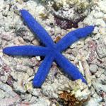 Answer Starfish